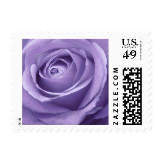 Lavender Rose Collection Postage Stamp