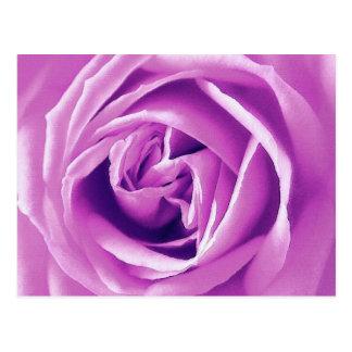 Lavender rose print postcard