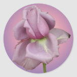 Lavender rose sticker
