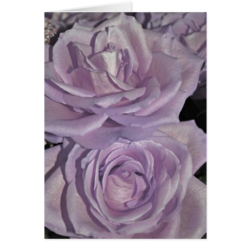 Lavender Roses collection Card