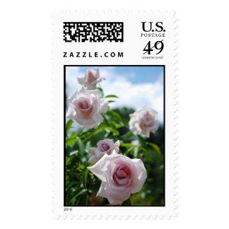 Lavender Roses Postage Stamp