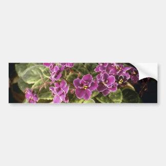 Lavender Saintpaulia 'Purple Choice' (African Viol Car Bumper Sticker