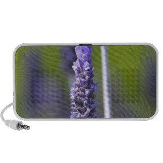 Lavender iPod Speaker