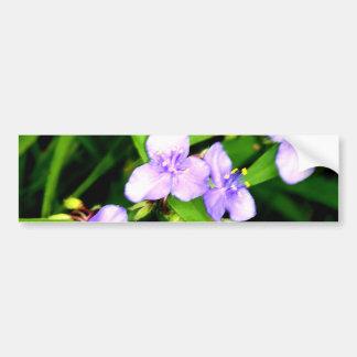 Lavender Spider Flower Bumper Sticker
