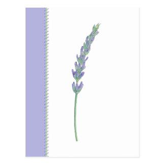 Lavender Sprig Postcard