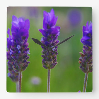 lavender square wallclock