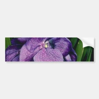 Lavender Sunray, X Gordon Dillon (Vanda) flowers Car Bumper Sticker