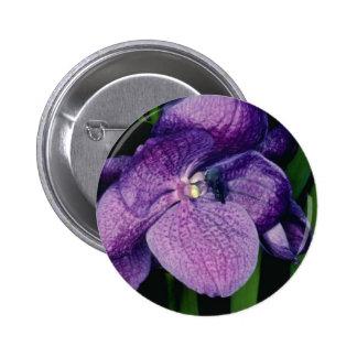 Lavender Sunray, X Gordon Dillon (Vanda) flowers Buttons