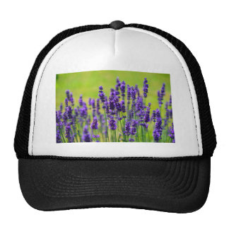 Lavender Trucker Hat