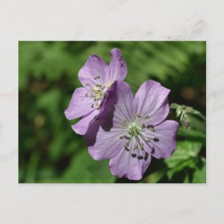 Lavender Twins Wildflower Flower Photo Postcard postcard