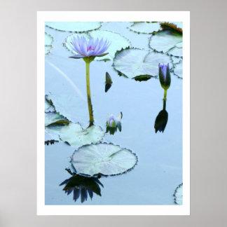 Lavender Waterlilies & Lilypads Print