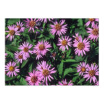 Lavender White Yellow Center Aster, (Aster Sibiric Personalized Invitation