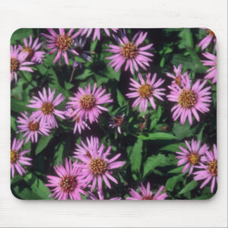 Lavender White Yellow Center Aster, (Aster Sibiric Mouse Pad