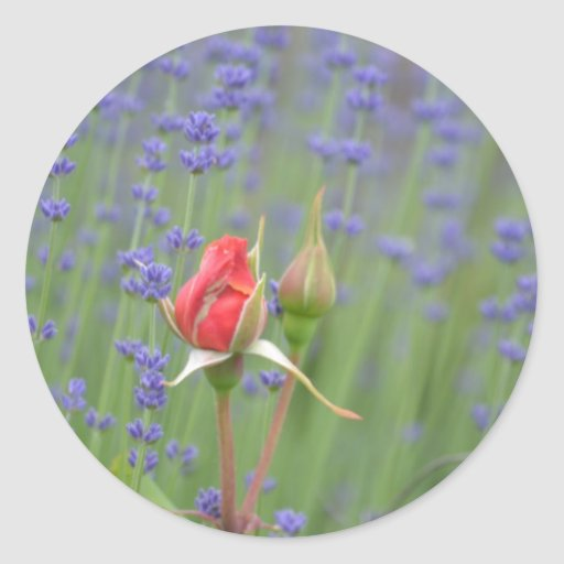 Lavender with Roses Classic Round Sticker