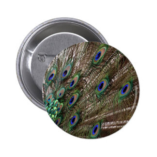 Lavish Peacock Flumes Pinback Button