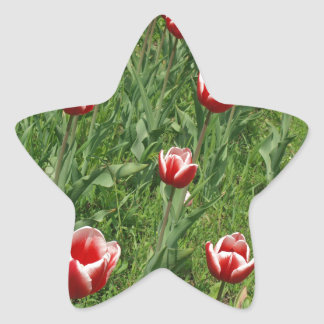 Lawn with red tulips closeup star sticker