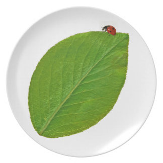 Laybug Party Plate