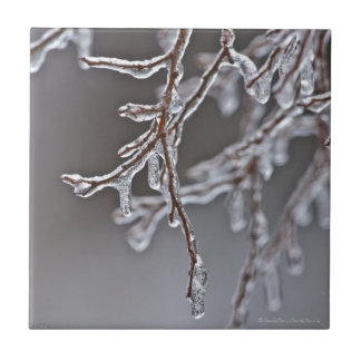 Layered Ice Branches on the Trail Small Square Tile