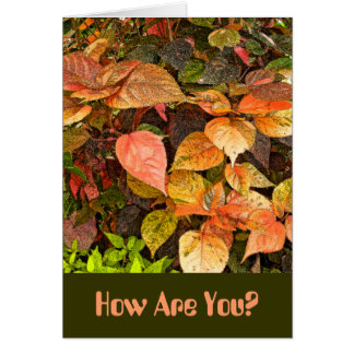 LAYERS OF MULTI-COLORED LEAVES / HOW ARE YOU? CARD