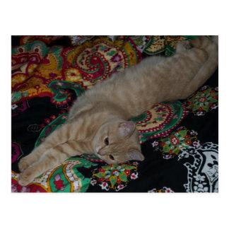 laying cat postcard