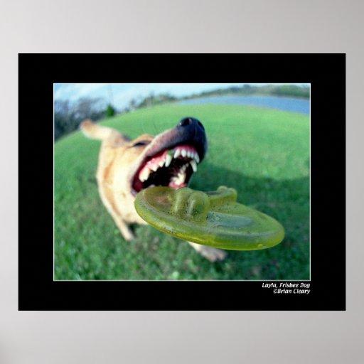 Layla, perro del disco volador póster