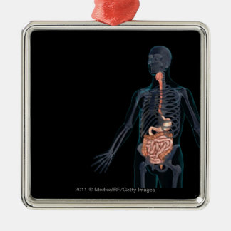 Layout of the human digestive system metal ornament