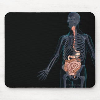 Layout of the human digestive system mouse pad