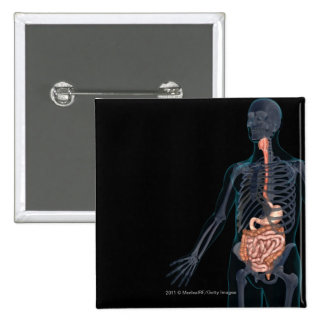 Layout of the human digestive system pinback button