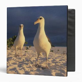 Laysan Albatross, Diomedea immutabilis), 2 Binder