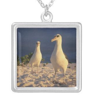 Laysan Albatross, Diomedea immutabilis), 2 Pendants