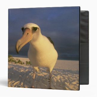 Laysan Albatross, Diomedea immutabilis), Binder