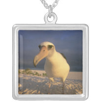 Laysan Albatross, Diomedea immutabilis), Silver Plated Necklace