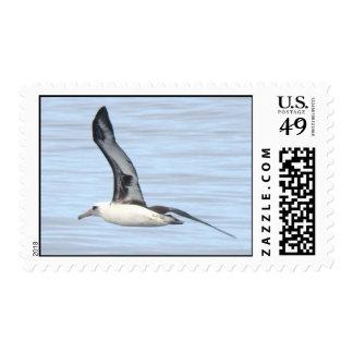 Laysan Albatross stamp