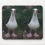 Laysan albatross standing mouse pad