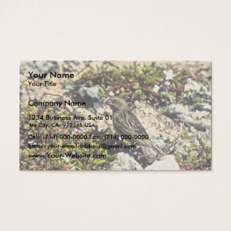 Laysan finch business card