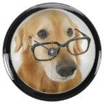 Lazo y vidrios que llevan del perro que se sientan relojes aquavista