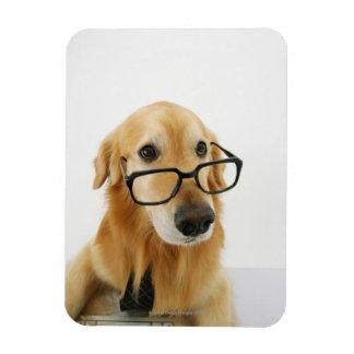 Lazo y vidrios que llevan del perro que se sientan iman rectangular