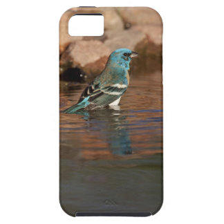 Lazuli Bunting (Passerina amoena) bathing in iPhone 5 Cover