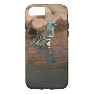 Lazuli Bunting (Passerina amoena) bathing in iPhone 8/7 Case