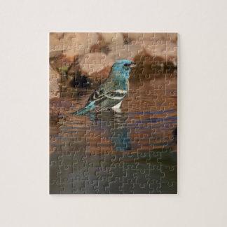Lazuli Bunting (Passerina amoena) bathing in Jigsaw Puzzle