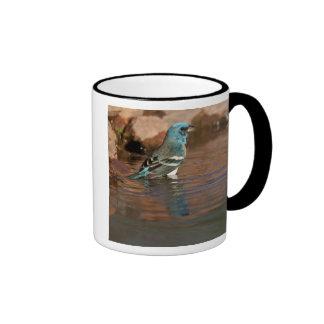 Lazuli Bunting (Passerina amoena) bathing in Ringer Coffee Mug