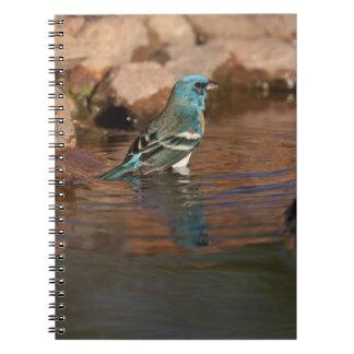 Lazuli Bunting (Passerina amoena) bathing in Notebook