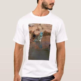 Lazuli Bunting (Passerina amoena) bathing in T-Shirt