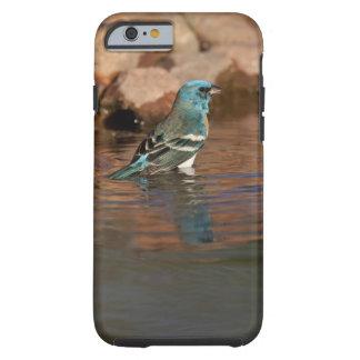 Lazuli Bunting (Passerina amoena) bathing in Tough iPhone 6 Case