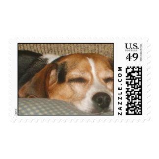 Lazy Beagle Postage Stamp