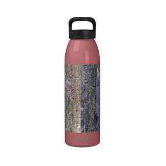 Lazy Bunny Reusable Water Bottles