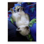 Lazy Cat Cards