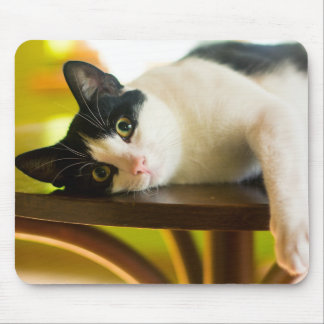 Lazy Cat Mouse Pad
