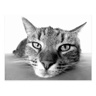Lazy Cat Relaxing, black & white Postcard