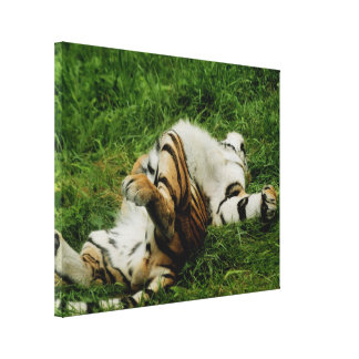 Lazy Day Tiger Stretched Canvas Prints
